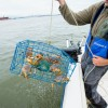 Pulling in a good crab fishing trap