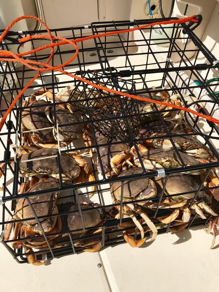crabbing_trips_vancouver